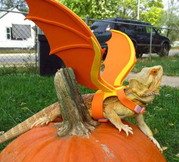 vrai petit dragon