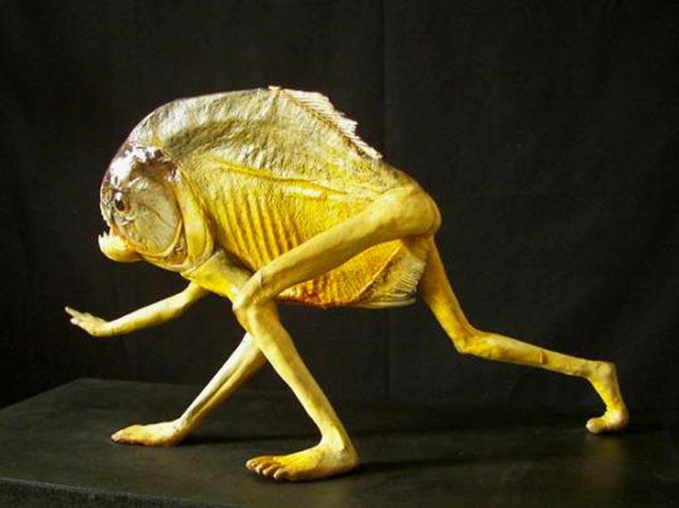 evolution poisson homme